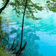 Stock Photo: Summer azure limpid transparent lake (Plitvice, Croatia)
