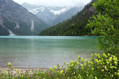 Plansee summer landscape (Austria). — Stock Photo