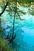 Summer azure limpid transparent lake (Plitvice, Croatia) — Stock Photo