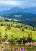 Summer mountain country view — Stock Photo