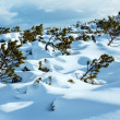 Beautiful winter mountain landscape. - Stock Photo