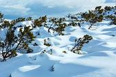 Beautiful winter mountain landscape. — Stock Photo