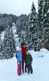 Vista de invierno alpes cascada — Foto de Stock