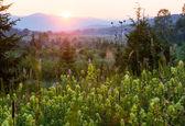 Sommerlandschaft mit wildblumen — Stockfoto