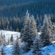 Morning winter mountain landscape — Stock Photo #19911685