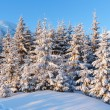 Sunrise winter mountain landscape — Foto Stock