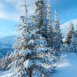 Winter mountain landscape with snowy trees — Stock Photo