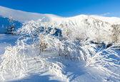 Morning winter mountain landscape — Stock Photo