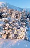 Zonsopkomst winter berglandschap — Stockfoto