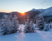 Sunrise winter mountain landscape with fir trees. — Stock Photo