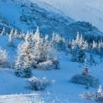 Morning winter mountain landscape — Stock Photo #20822057