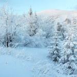 Predawn winter mountain landscape — Stock Photo #20938651
