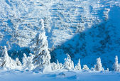 Winter mountain landscape with snowy trees — Stockfoto