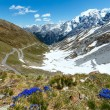 Stock Photo: Summer Stelvio Pass (Italy) and blue flowers in front.