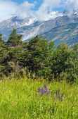 Summer mountain landscape (Alps, Switzerland) — Stockfoto