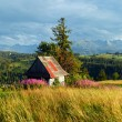 Summer mountain country panorama. - Stock Photo