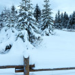 Overcast day winter fir forest . — Stock Photo
