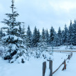Winter country road with fir forest (overcast day). — Stock Photo