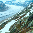 Stock Photo: Great Aletsch Glacier (Bettmerhorn, Switzerland)