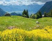 желтые полевые цветы на склоне горы летом — Стоковое фото
