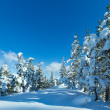 Winter mountain fir forest landscape — Stock Photo