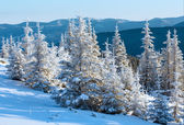 Sunrise and snowy trees on hill — Stock Photo