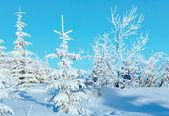 Soluppgång och snowy träden på kullen — Stockfoto