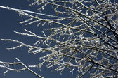 Ice-covered branches on night sky background. — Stock Photo