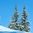 Winter spruce trees on blue sky background — Stock Photo