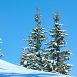 Winter spruce trees on blue sky background — Stock Photo