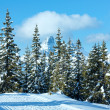 Winter mountain fir forest landscape — Stock Photo #32704111