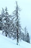 Zimní horské zamlžená krajina — Stock fotografie
