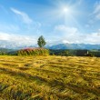 Summer mountain evening country view with mown field — Stock Photo #33777011