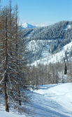 Winter forest near Dachstein mountain massif — Stock Photo