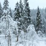 Winter mountain landscape (Austria, Tirol). — Stock Photo #34092011