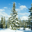 Winter mountain fir forest landscape — Stock Photo #34758449