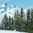 Winter mountain fir forest landscape — Stock Photo #34758565