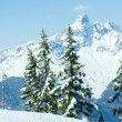 Stock Photo: Winter mountain fir forest landscape