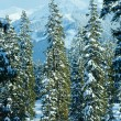 Winter mountain fir forest landscape — Stock Photo #34758585