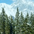 Winter mountain fir forest landscape — Stock Photo #34758779
