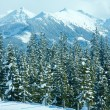 Winter mountain fir forest landscape — Stock Photo #34759055