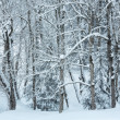 Snowfall in winter mountain misty forest — Stock Photo #34760611