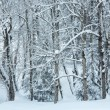 Snowfall in winter mountain misty forest — Stock Photo
