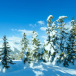 Winter mountain fir forest landscape — Stock Photo #34760801
