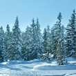 Winter mountain fir forest landscape and snowfall — Foto de Stock