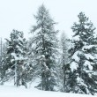 Winter mountain misty landscape — Stock Photo