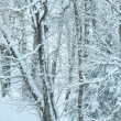 Snowfall in winter mountain misty forest — Stock Photo #35274461