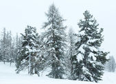 Winter mountain misty landscape — Стоковое фото