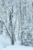 Snowfall in winter mountain misty forest — Foto Stock