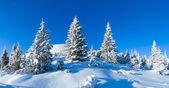 Morning winter mountain landscape (Carpathian, Ukraine). — Stock Photo